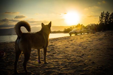 wail: Dog on beach looking sunset.