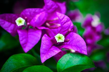 fantasize: Pink flowers Stock Photo