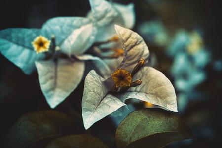 fantasize: Blue - orange flower