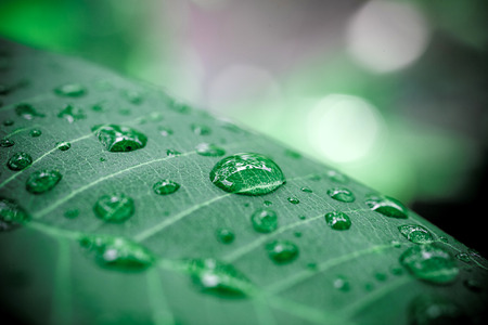 water ecosystem: Rain drops on green leaf. Macro shoot