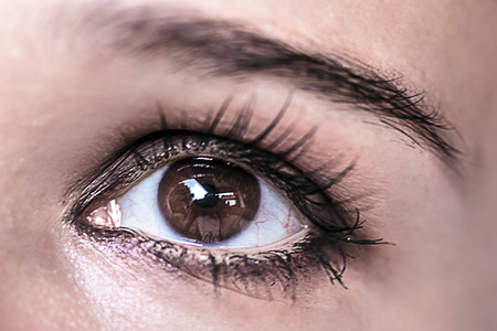 beaux yeux: Maquillage des yeux Brown. Beautiful Eyes Make-up. Macro