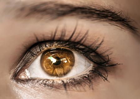 Brown Eye Makeup. Beautiful Eyes Make-up. Macro