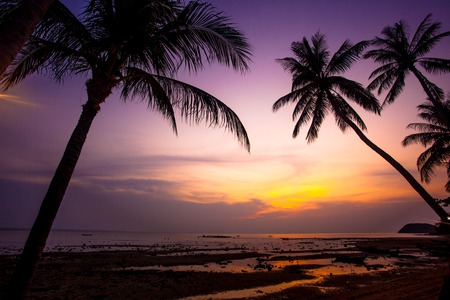red and black background: Palm trees silhouette on sunset tropical beach