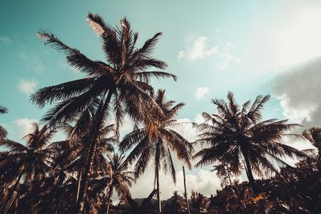 palmier: Palmiers Vintage à côte tropicale Banque d'images