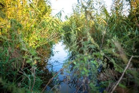 mirror on the water: Swampy  lake with mirror water level in mysterious forest, young tree Fresh green color of herbs