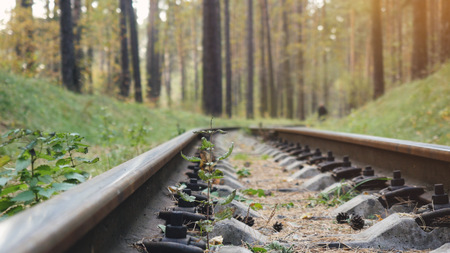 endlessness: Railway Road in the pine forest