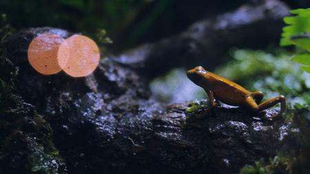 Frog at the aquarium glass.
