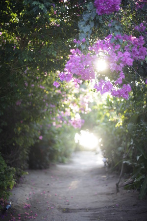Path Outdoor Landscape with beautiful flower and Sun Light