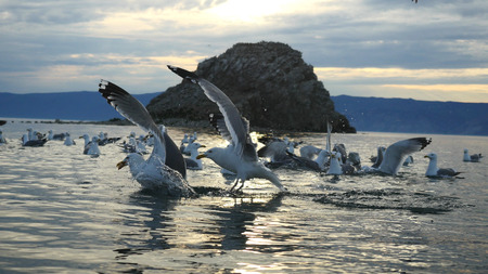 Beautiful Mountain Baikal Lake. Sunset over the mountain peaks and flying graceful gulls