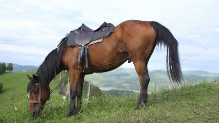 horse in a wild nature