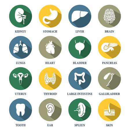 Vector human organs icons set Vectores