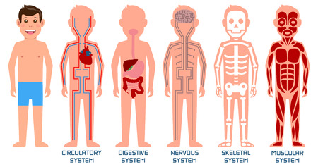 Five systems of human body. Vector illustration.