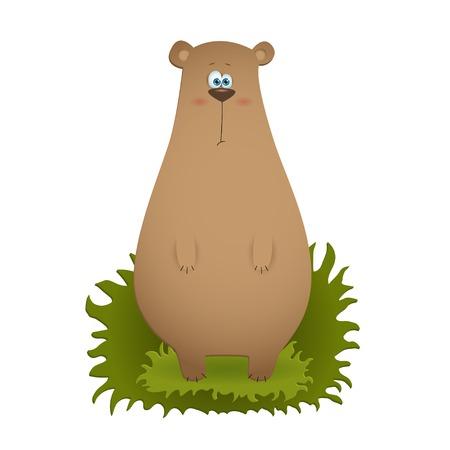 bewildered: Cartoon brown bear standing on a grass illustration