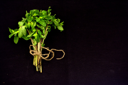 bouquet of mint on a black background Banco de Imagens