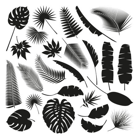 Black Tropical Leaves Collection, isolate vector. Beautiful Set. Vector illustration.
