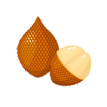 ita palm isolated on white background. Bright vector illustration of colorful half and whole of juicy ita palm. Fresh cartoon