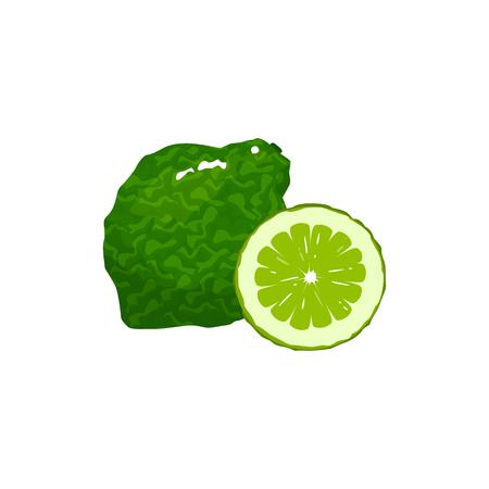 bergamot isolated on white background. Bright vector illustration of colorful half and whole of juicy bergamot. Fresh cartoon Иллюстрация