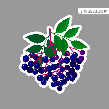 Elderberries sticker isolated on white background. Bright vector illustration of colorful juicy berries. Fresh cartoon style Illustration