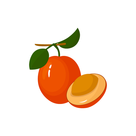 Ximenia isolated on white background. Bright vector illustration of colorful half and whole of juicy ximenia. Fresh cartoon