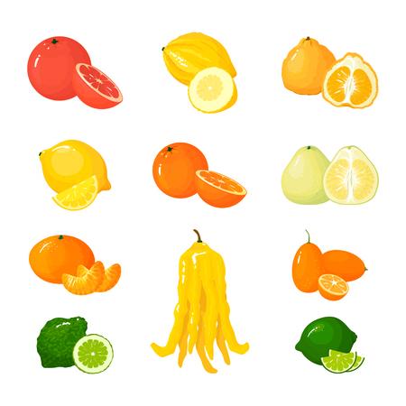 Wektor kreskówka duży zestaw owoców cytrusowych. Ikony na białym tle. Grejpfrut, pomelo, pomarańcza, mandarynka z cytryną i limonką, brzydki i cytron, kumkwat i dłoń Buddy.