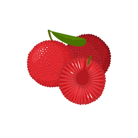 yumberry isolated on white background. Bright vector illustration of colorful half and whole of juicy yumberry. Fresh cartoon