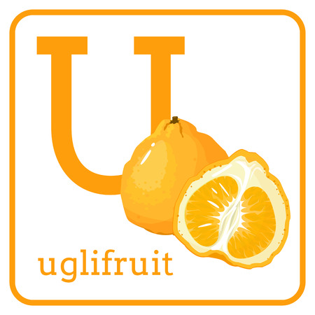 An alphabet with cute fruits, letters A to Z. Cartoon vector alphabet isolated on a white background. Letter U uglifruit Vettoriali