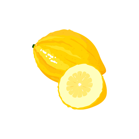 citron isolated on white background. Bright vector illustration of colorful half and whole of juicy citron. Fresh cartoon Çizim