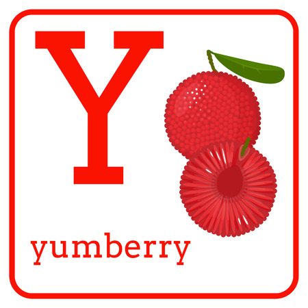 An alphabet with cute fruits, letters A to Z. Cartoon vector alphabet isolated on a white background. Letter Y yumberry