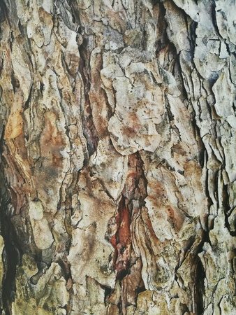 Close-up of the crust on the tree