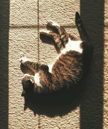 interior: Cat sleeping in the window light