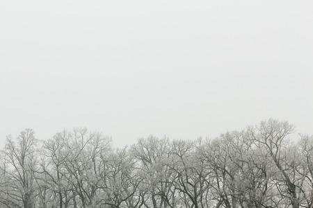 Cime degli alberi spogli in inverno Archivio Fotografico