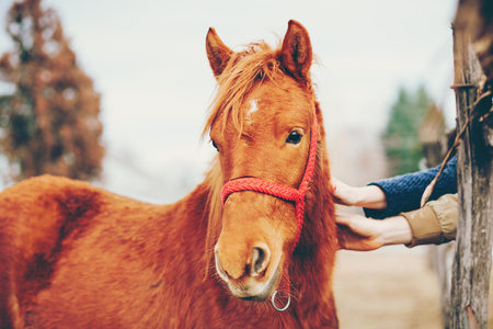 Hands stroking a beautiful horse