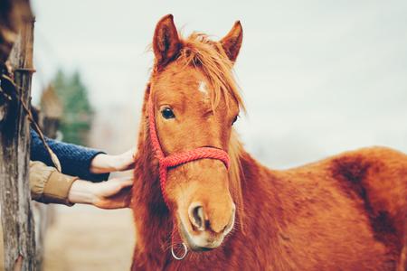 Mani accarezzare un bel cavallo