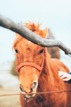 Hand stroking a beautiful horse Archivio Fotografico