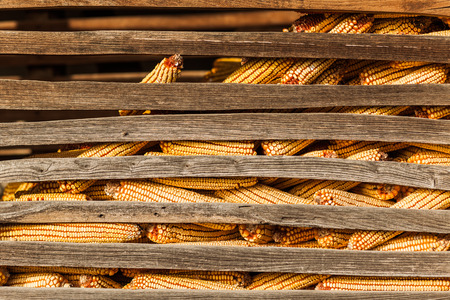 Close-up of the corn in the barn