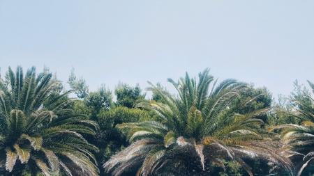 Palm trees against the blue sky Archivio Fotografico