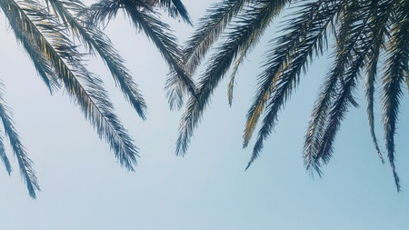 Palm tree leaves from a low angle Archivio Fotografico