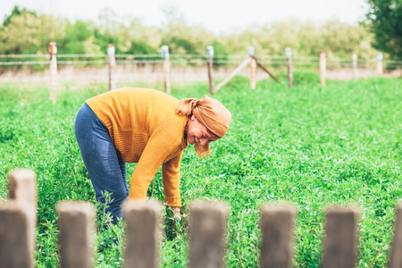 Mature woman working in the field 스톡 콘텐츠