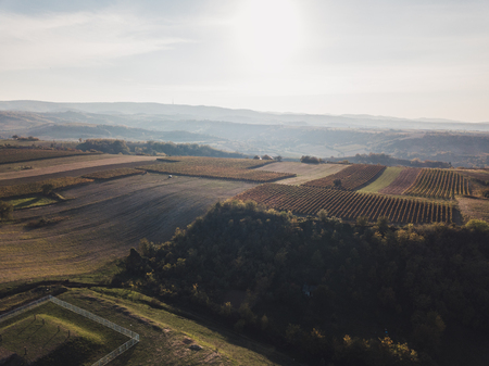 Aerial view of the vineyards in sunset Stock Photo