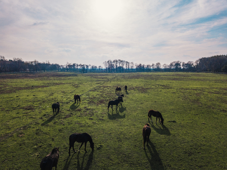 Horses grazing on farm one autumn afternoon Archivio Fotografico