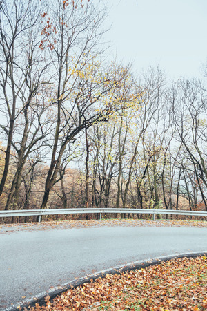 View of road in beautiful autumn forest Archivio Fotografico