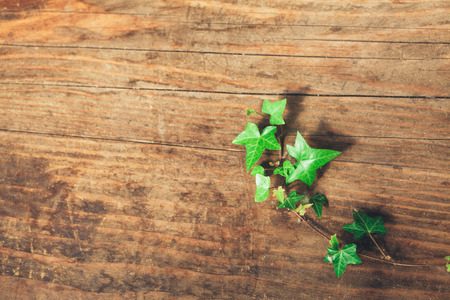 Green liana in wooden surface background with copy space