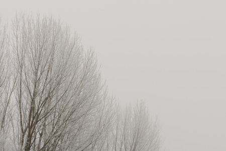 Top of the trees in cold foggy winter Banco de Imagens