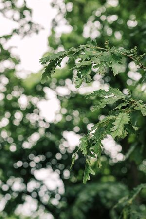 Moody green leaves in deep forest