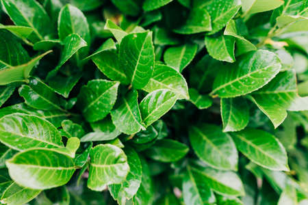 Close-up of a lush green leaves