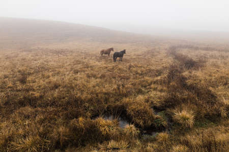 Two horses on a misty meadow