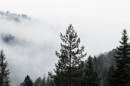 Misty mountain range in early morning 版權商用圖片