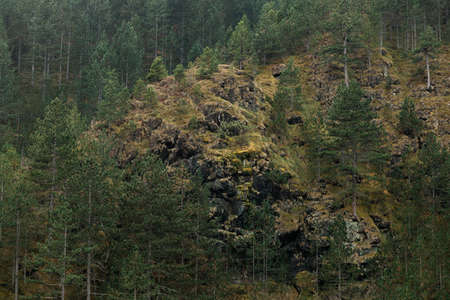 View of the forest on the mountain side 版權商用圖片