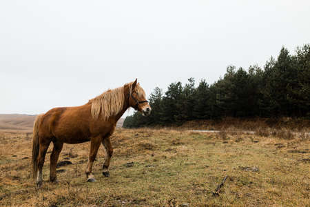 Beautiful brown horse on the field in early morning 版權商用圖片