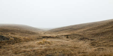 View of the misty meadow in the winter morning